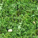Seamless mowed green grass. background, texture Stock Images