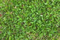 Seamless natural green grass texture from garden Stock Photo