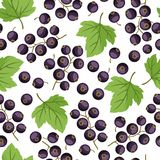 Seamless nature pattern with black currants. Stock Photos
