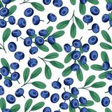Seamless nature pattern with blueberries. Stock Images