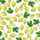 Seamless nature pattern with gooseberries. Stock Photos