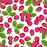 Seamless nature pattern with raspberries. Royalty Free Stock Image