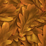 Seamless oak leafs background. Stock Photography