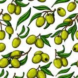 seamless olive modell Räcka utdragen vektorbakgrund med filialen av den gröna olivträdet royaltyfri illustrationer