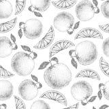 Seamless orange pattern. Fresh fruit sketch Royalty Free Stock Photo