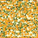 Seamless oranges Stock Photography