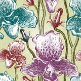 Seamless orchid floral pattern. Vector, EPS10 Stock Image