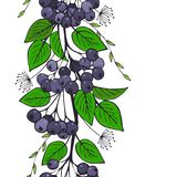 Seamless ornament of black ashberry. branch of aronia pattern.  Royalty Free Stock Photos