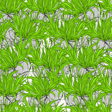 Seamless ornament with grass. Royalty Free Stock Photography