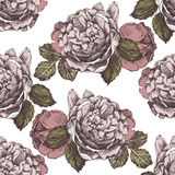 Seamless ornament with hand drawn roses Royalty Free Stock Image