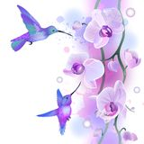 Seamless ornament with orchids and humming birds Stock Photos