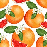 Seamless paints grapefruit pattern on white background. For text stock illustration