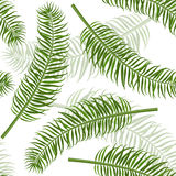 Seamless palm leaf pattern. Stock Photos