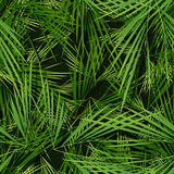 Seamless Palm Trees Leaves Wallpaper Stock Photography