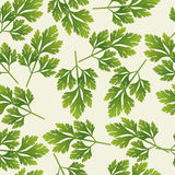 Seamless parsley pattern, vector  Stock Image