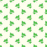 Seamless parsley pattern Stock Photography