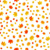 Seamless patern of maple leaves on white background Stock Image