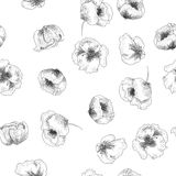 Seamless patern with poppies in graphic style. Hand-drawn black-and-white poppies pattern in graphic style Royalty Free Illustration