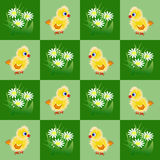 Seamless patter with chicks and chamomiles Royalty Free Stock Image