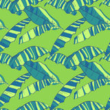 Seamless pattern with abstract banana leaves. Tropic bright background. Vector illustration Stock Photos