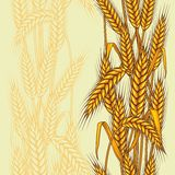 Seamless pattern abstract with wheat.  Royalty Free Stock Photo