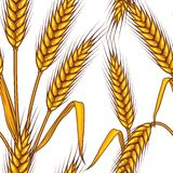 Seamless pattern abstract with wheat.  Royalty Free Stock Image