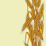 Seamless pattern abstract with wheat.  Royalty Free Stock Photos