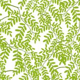 Seamless pattern with acacia leaves. Tropical jungle plants. Woody natural rainforest royalty free illustration