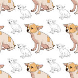 Seamless pattern of adorable chihuahua Royalty Free Stock Photo