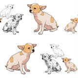 Seamless pattern of adorable chihuahua Stock Photos