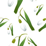 Seamless pattern with alone snowdrop flowers with green stems and leaves different sizes. White background. Vector illustration Stock Photography