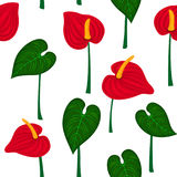 Seamless pattern with anthurium flowers and leaves. Floral repeatable texture Royalty Free Stock Images