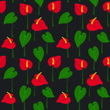 Seamless pattern with anthurium flowers and leaves. Floral texture Royalty Free Stock Photo