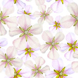 Seamless pattern with apple flowers. Seamless pattern of spring apple flowers stock illustration