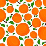 Seamless pattern of apricots, vector illustration. Royalty Free Stock Photo