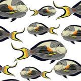 Seamless pattern Arabian surgeon Sohail fish. vector illustratio. Seamless pattern  Arabian surgeon Sohail fish  vector illustration Stock Photography