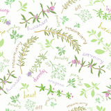 Seamless Pattern With Aromatic Herbs And Cute Titles Royalty Free Stock Photos