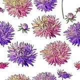 Seamless pattern with asters. Royalty Free Stock Photography