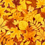 Seamless pattern with autumn colorful leaves. Vector illustration. Stock Photography