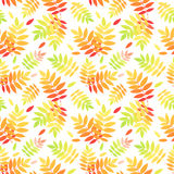 Seamless pattern with autumn colorful rowan leaves Royalty Free Stock Images