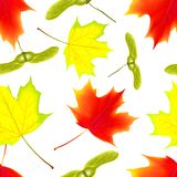 Seamless pattern with autumn maple falling leaves on isolated white background. Falling leaves. Vector illustration. Seamless pattern with autumn falling maple Stock Photo