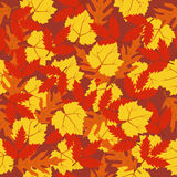 Seamless pattern autumn leaves Royalty Free Stock Image