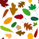 Seamless pattern with autumn leaves Stock Photo