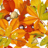 Seamless pattern from autumn leaves and chestnut Stock Photo
