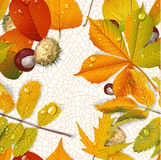 Seamless pattern from autumn leaves and chestnut on the  thread Royalty Free Stock Images