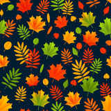 Seamless pattern with autumn leaves 5 Royalty Free Stock Images