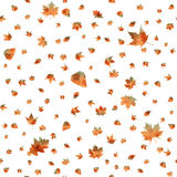 Seamless pattern of autumn leaves Stock Images