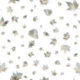 Seamless pattern of autumn leaves Stock Photos