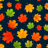 Seamless pattern with autumn leaves Royalty Free Stock Image