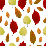 Seamless pattern with autumn leaves. EPS,JPG. Autumn vector. Seamless pattern with autumn leaves. Red, green and orange leaves on a white background. Vector Stock Images